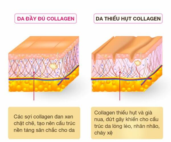 viên uống collagen nào tốt, viên uống collagen có tốt không, viên uống collagen loại nào tốt webtretho, viên uống collagen, viên uống collagen loại nào tốt, viên uống collagen tốt, viên uống collagen tốt nhất, collagen loại nào tốt webtretho, kinh nghiệm uống collagen, uống collagen loại nào tốt webtretho, collagen adiva webtretho