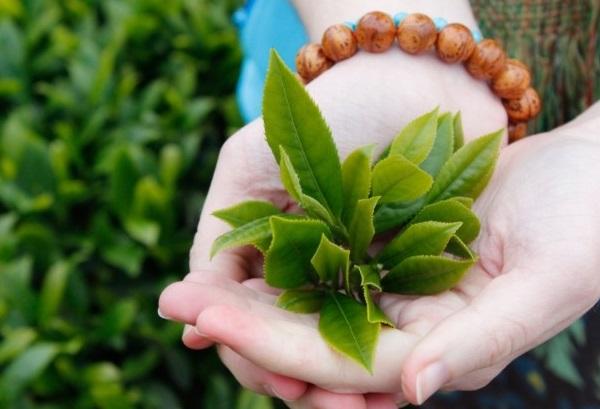 Gợi ý các cách dùng trà xanh chống lão hóa da đơn giản tại nhà