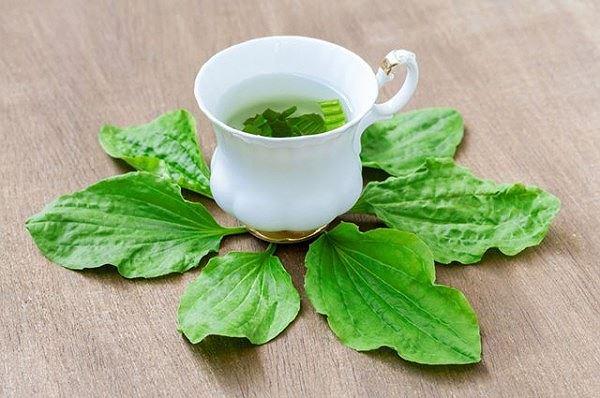 các loại lá uống mát gan giải độc, uống gì để mát gan giải độc, lá mát gan giải độc, uống gì mát gan giải độc, uống gì để mát gan, trà mát gan giải độc, nước uống mát gan giải độc