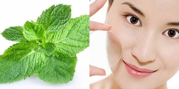 Tác dụng của bạc hà đối với da mặt