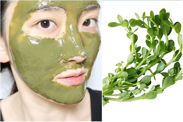rau sam có tác dụng gì cho da, cây rau sam có tác dụng gì cho da, tác dụng của rau sam với da mặt