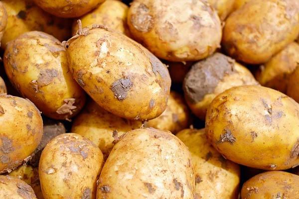 Cách đắp mặt nạ khoai tây hiệu quả nhất
